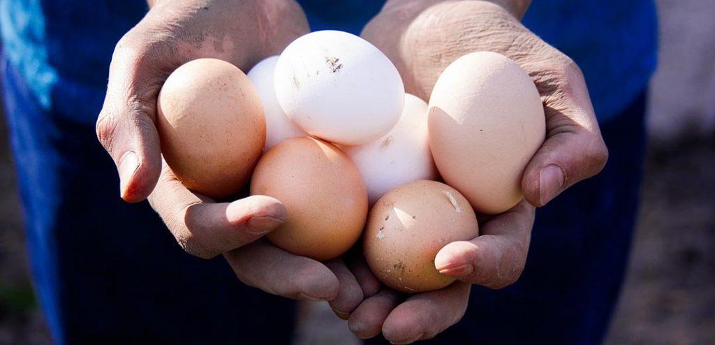 100% от кулинарните продукти на Nestlé в Европа вече се произвеждат с яйца от подово отглеждани птици